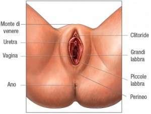 zona genitale femminile